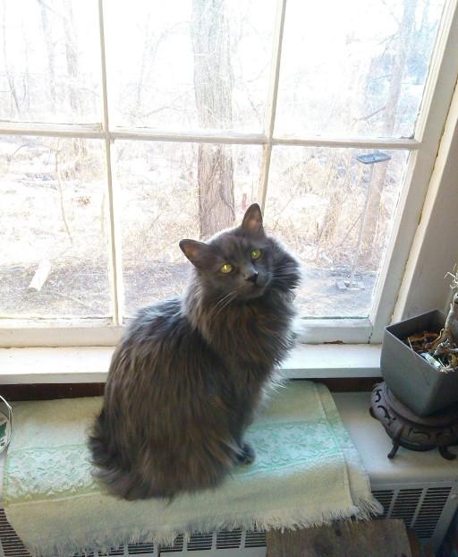 Kipper in Window