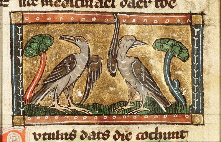 medieval cuckoo